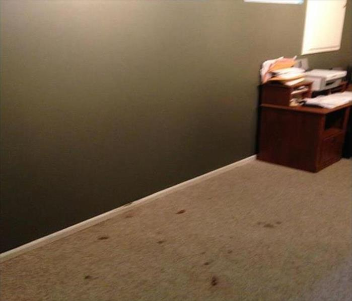 Mold Damaged Wall in a Small Rochester Office After