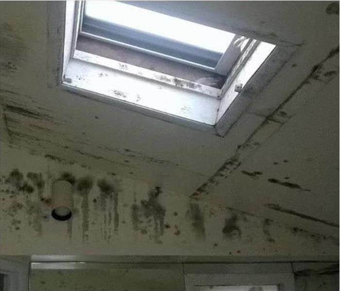 Mold Damage – Dover Building