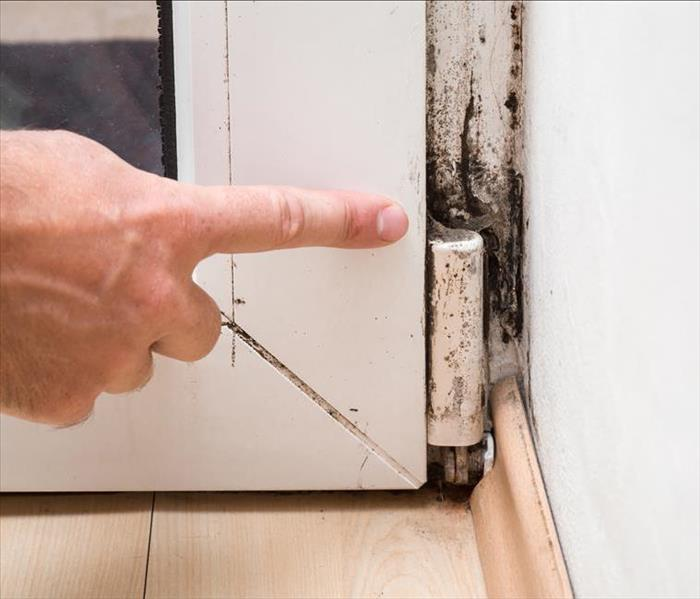 Mold Remediation Rid Your Rochester Home Of Mold Call The Experts
