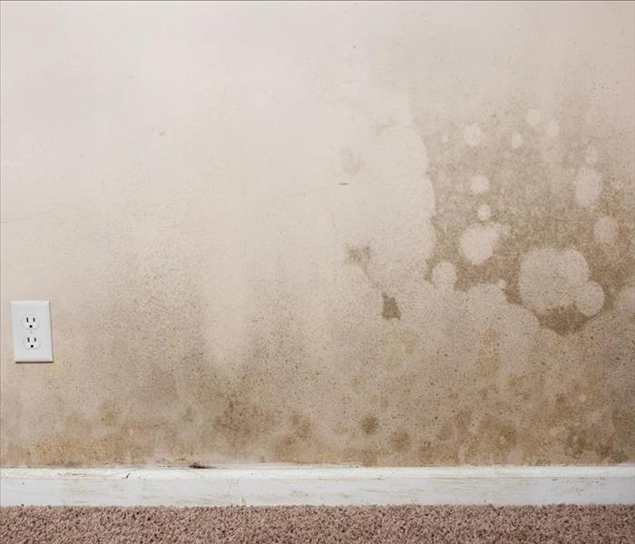 Mold Remediation There are Different Reasons Behind the Development of Mold Damage in Your Dover Attic