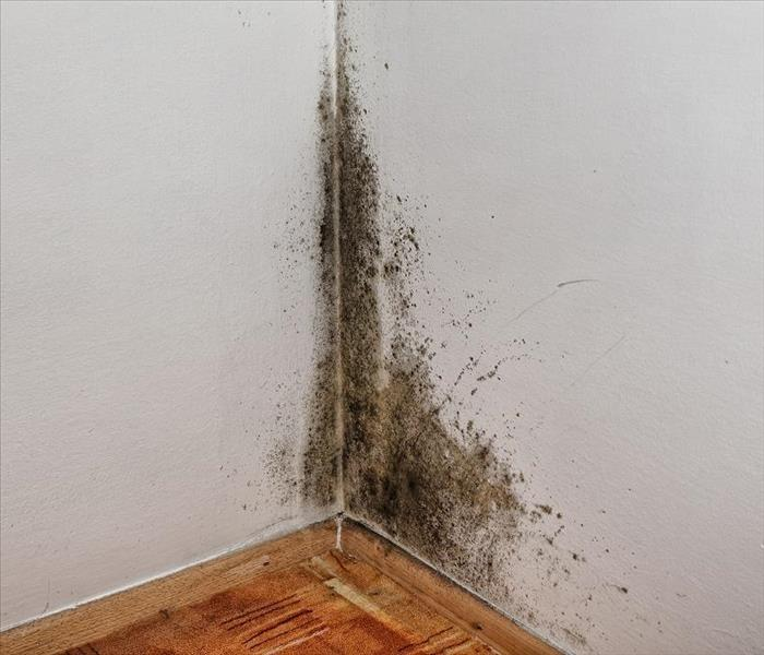 Mold Remediation Mold Damage Remediation in Rochester