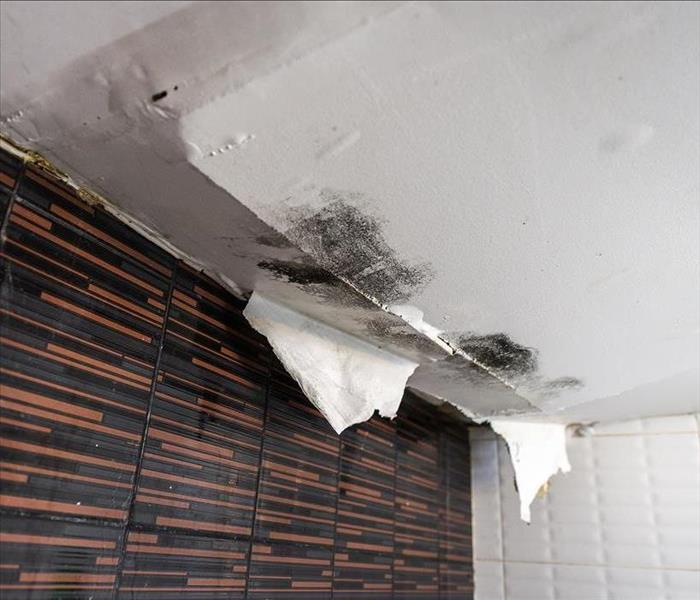 Mold Remediation Mold Damage Technicians In Rochester Explain The Importance Of Rapid Structural Drying