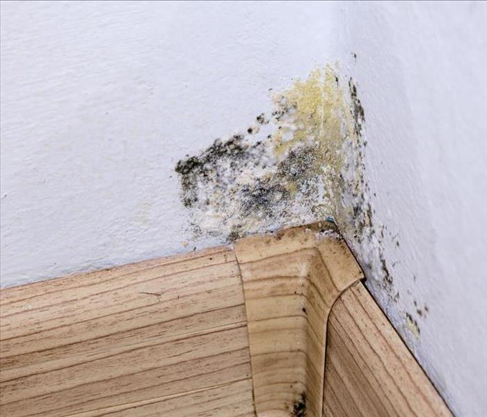 Mold Remediation How Mold Tracks Into a Rochester Home