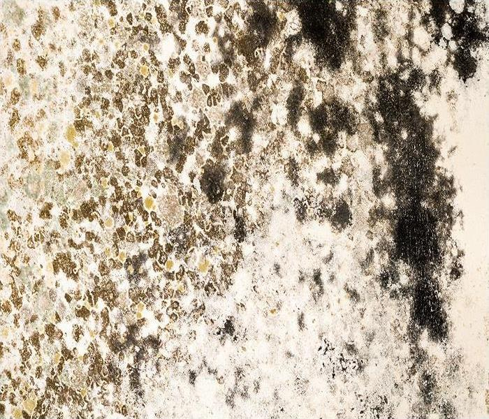 Mold Remediation Mold Damage Issues Do Not Disappear During The Winter In Somersworth