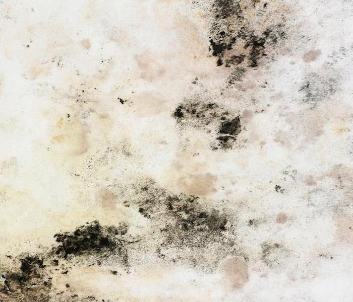 Mold Remediation Why Seek Professional Help For Mold Damage In Dover