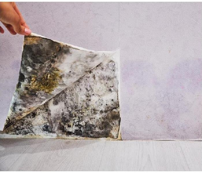 Why SERVPRO Professionals Explain How to Remove Mold From Your Rochester Home